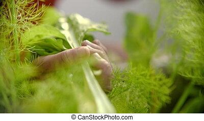vert, frais, haut, feuilles, personne, légume, cueillette