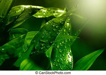 vert, gouttes, feuille