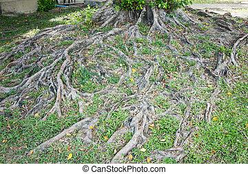 vert, grass., racine arbre