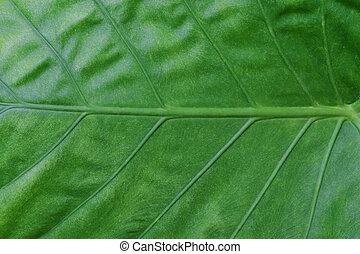 vert, haut fin, feuille, arrière-plan.