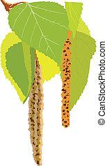 vert, image, vecteur, arbre, feuilles