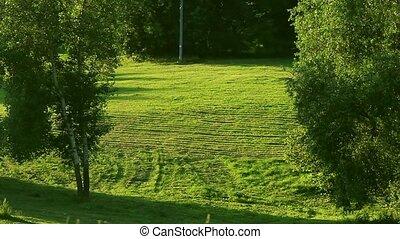 vert, jardin