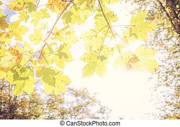 vert, jaune, arrière-plan orange, coloré, clair, feuilles, autumn., couleur