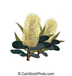 vert-jaune, fleurs, banksia