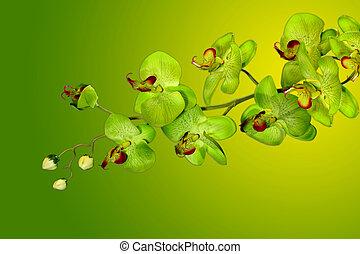 vert, joli, jaune, orchidées