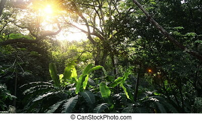 vert, jungles, solaire