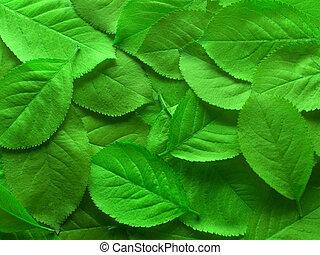 vert, juteux, pousse feuilles