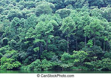 vert, lac, arbres