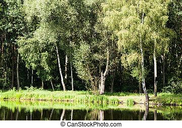 vert, lac, paysage nature, forêt, fond