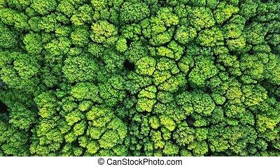 vert, lent, aérien, oeil, 4k, vue, mouvement, arbres, oiseau, panoramique, bourdon, vidéo, forêt, en avant!, agricole, bushes., field.
