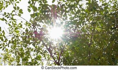 vert, motion., lent, arbre, sunlight.