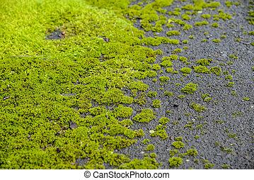 vert, mousse, plancher