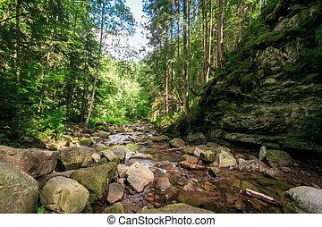 vert, mousse, sur, rochers, près, a, ruisseau