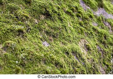 vert, mousse, texture, rocher