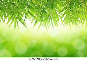 vert, naturel, fond