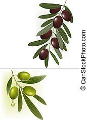 vert, olives., fond