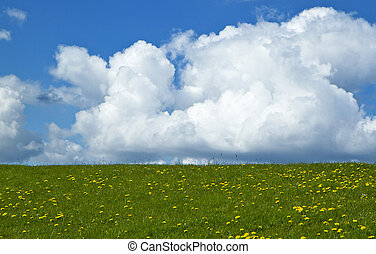 vert, paysage,  nature