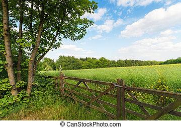 vert, printemps, paysage