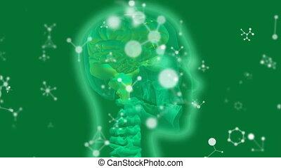 vert, rayon x, structures, humain, moléculaire, incandescent, tête