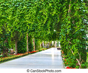 vert, rivage, parc, mer, ruelle