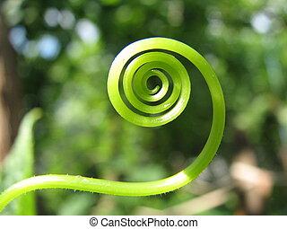vert, spirale