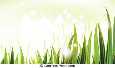vert, vecteur, conception, herbe