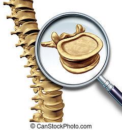 vertebra, vertebral kolonne
