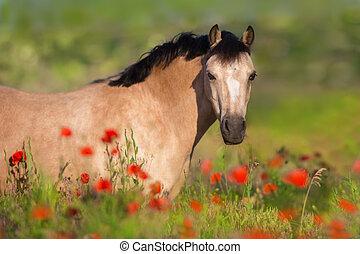 verticaal, bloemen, pony