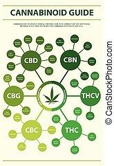 verticaal, cannabinoid, gids, infographic