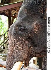 verticaal, elefant
