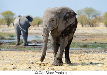 verticaal, kalf, elefant
