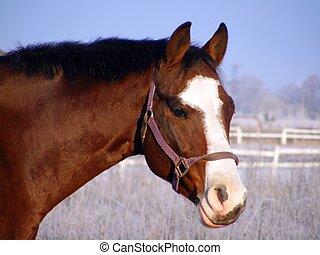 verticaal, paarde, baai