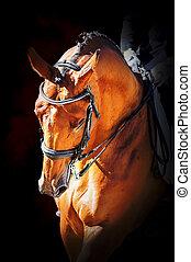 verticaal, paarde, sportende, dressage