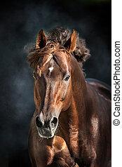 verticaal, paarde, vrijstaand