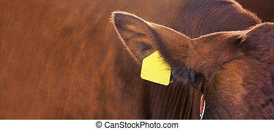 verticaal, rundvlees, kine., sick., landbouw, melk, meat., ...