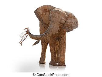 verticaal, spelend, elefant