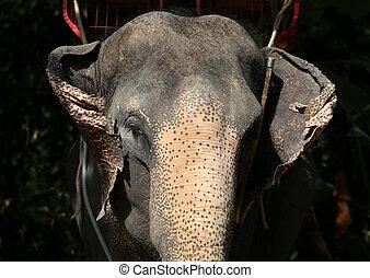 verticaal, van, een, elefant