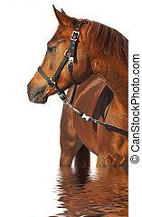 verticaal, van, een, paarde, van, bruine , color.