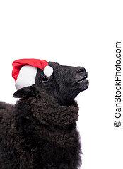 verticaal, van, schaap, in, kerstmis hoed, op wit