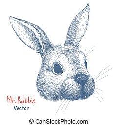 verticaal, vector, konijn