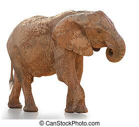 verticaal, wandelende, elefant