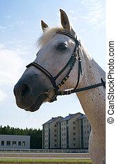 verticaal, wit paard