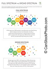 vertical, business, infographic, entiers, large, vs, spectre