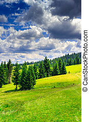 vertical clearing in a mountain forest after the storm -...