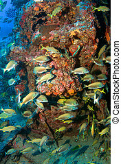 Vertical Composition of fish aggregation on an artificial reef in south east Florida.
