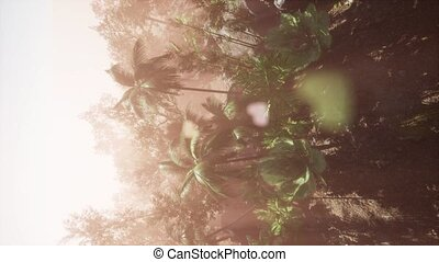 tropical green forest view with sun flare in morning -...
