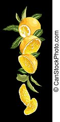 Vertical fruit decor line with orange fruit, halves, leaves and sllices made in realistic graphic design vector drawing