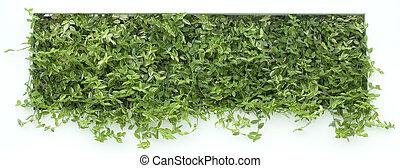 Vertical Garden Cutout - Vertical Garden of Green Creeper ...