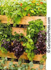 Vertical garden - Vertical vegetable garden designed for...