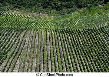 vertical German vineyards